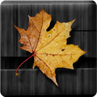 Golden Leaves Live Wallpaper - Have golden autumn leaves fall in your background