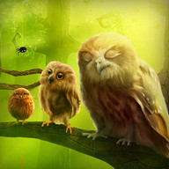 Owls Live Wallpaper Trial