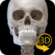 Skeletal System Lite - 3D Atlas of Anatomy