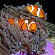 Tropical Fish Live Wallpaper