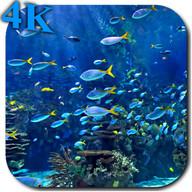 Aquarium 4K Video Wallpaper