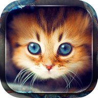 Cute Cats Live Wallpaper