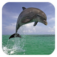 Dolphin 3d. Video Wallpaper