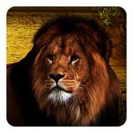 Lions Live Wallpaper