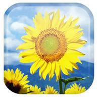 Sunflower sfondi animati