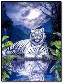 Tiger near lake