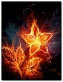Flowers In Fire