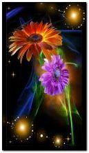闪光的花朵