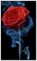 Smoke rose