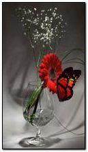 искристая стеклянная бабочка