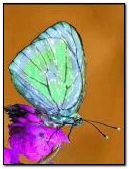 Abst Butterfly