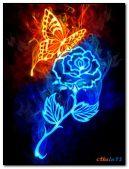 Fiery flower and butterfly