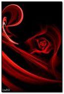 Rose rouge et bleue