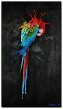 colourful perrot