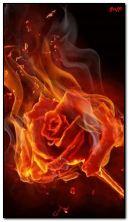आग गुलाब