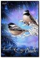 طيور الشتاء