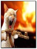 machine gun cat