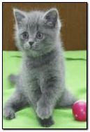 Kleine Katze 7