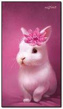 arnab merah jambu