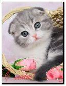 Charming kitten in a basket