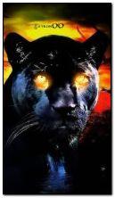 kot o ognistych oczach HDi10