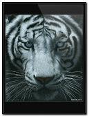 Animowane przekształcanie Tygrysa