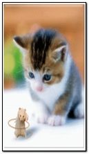 الهامستر ن القط