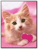 mèo tình yêu màu hồng