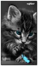 बिल्ली का बच्चा और तितली