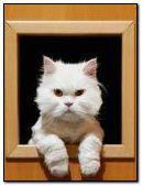 gato parlachin