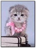 glamorous kitten