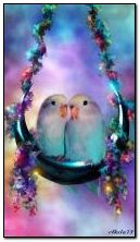 Lovers parrots