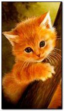 puppy cat 2