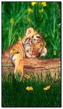 Tigre addormentata