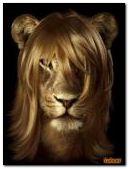 Glamorous lioness