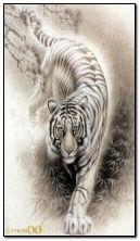 Tygrys i woda