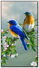 Ptaki na kwitnącej gałęzi 360?640