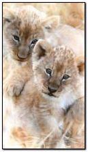 Babies Lion