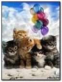 Kittens congratulations.