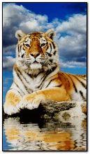 Tigre sur l'eau