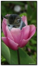 kitten in flower