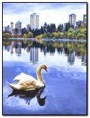 Tasik swan