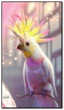 Parrot 360x640