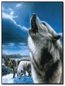 * howl *