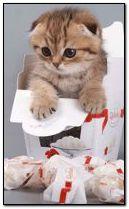 Mèo trong một hộp