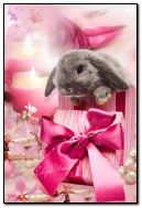 thỏ trong một món quà