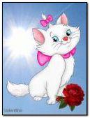 delicate cat