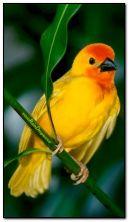 słodki ptak