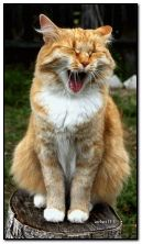 laughing or yawning)