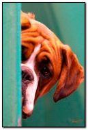 GRUUSIA DOG